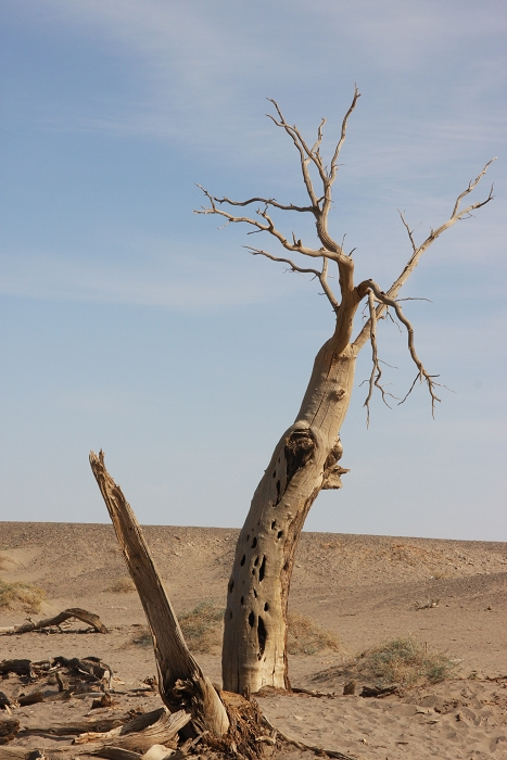 batang-pohon-kering