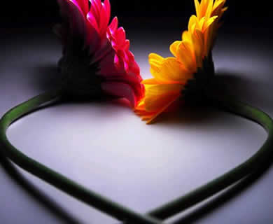 dua-bunga
